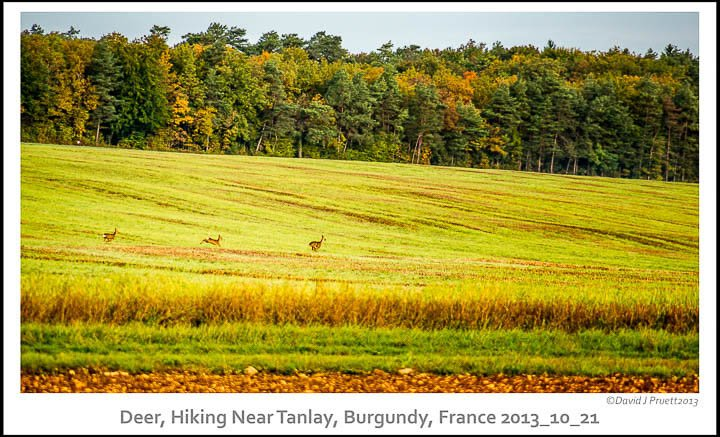 120_Tanlay_France2013_10_21-Edit.jpg