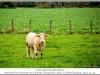 1177_Courcelles-le_s-MontbardFrance2013_10-Edit.jpg