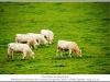1180_Courcelles-le_s-MontbardFrance2013_10-Edit.jpg