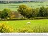 1196_Courcelles-le_s-MontbardFrance2013_10-Edit.jpg