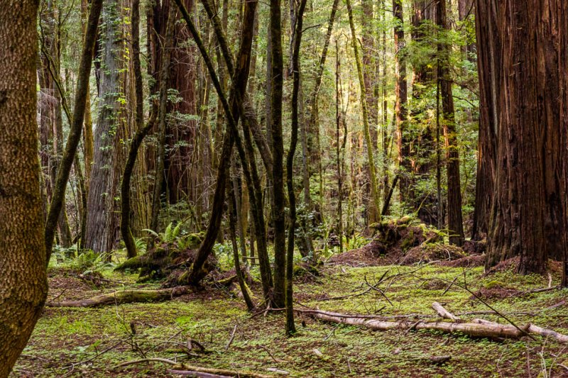 10 Armstrong Redwoods State Natural Reserve 2014_04-Edit.jpg