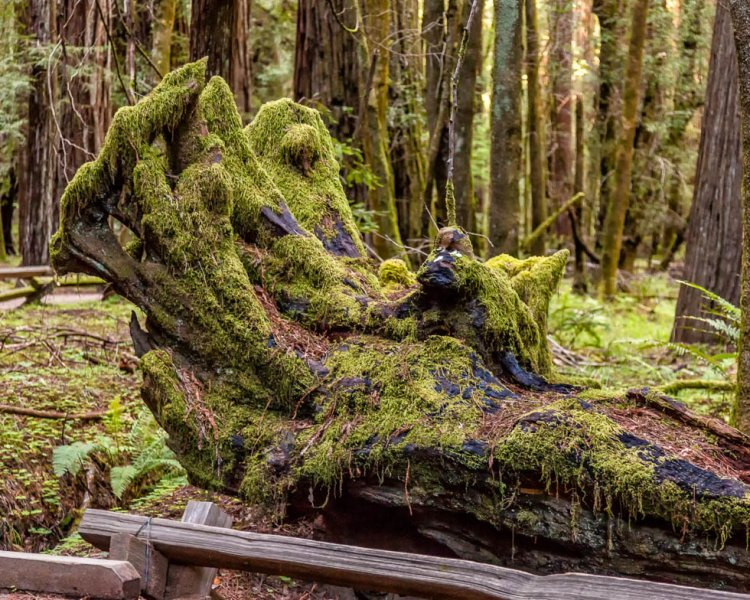 11 Armstrong Redwoods State Natural Reserve 2014_04-Edit.jpg