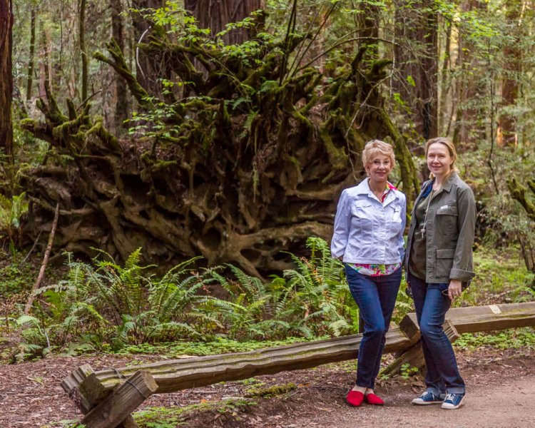 14 Armstrong Redwoods State Natural Reserve 2014_04-Edit.jpg