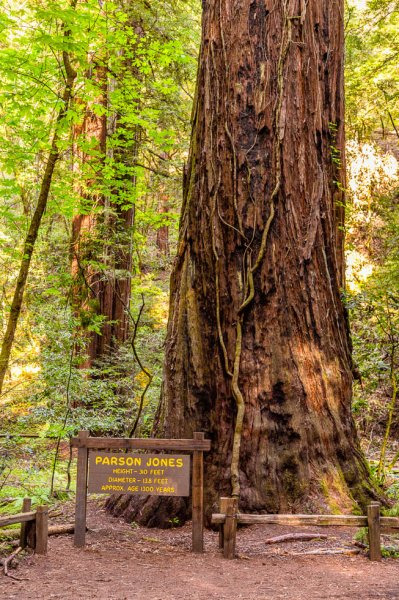 15 Armstrong Redwoods State Natural Reserve 2014_04-Edit.jpg