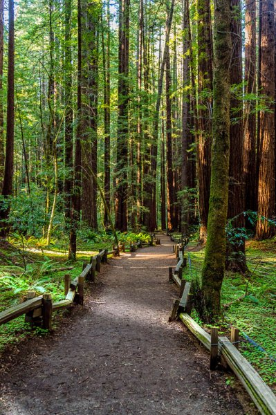 22 Armstrong Redwoods State Natural Reserve 2014_04-Edit.jpg