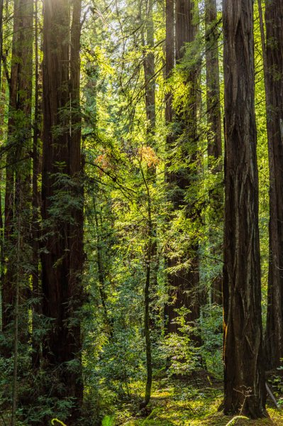 23 Armstrong Redwoods State Natural Reserve 2014_04-Edit.jpg