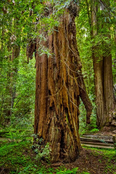 26 Armstrong Redwoods State Natural Reserve 2014_04-Edit.jpg