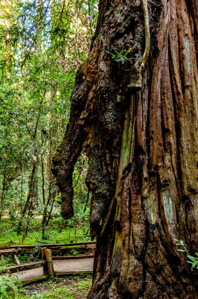 28 Armstrong Redwoods State Natural Reserve 2014_04-Edit.jpg