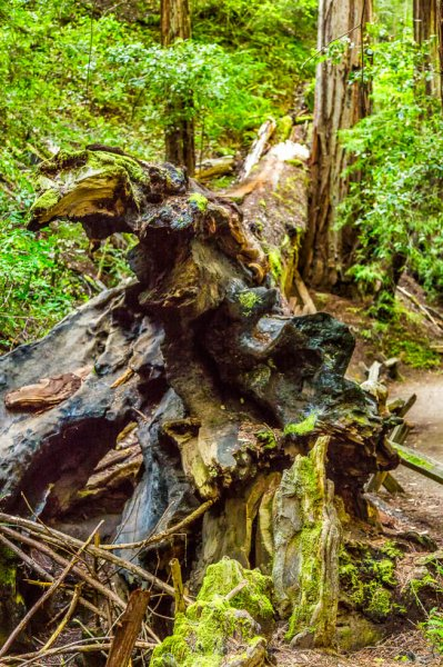 30 Armstrong Redwoods State Natural Reserve 2014_04-Edit.jpg