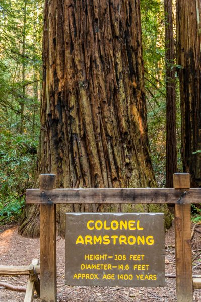 31 Armstrong Redwoods State Natural Reserve 2014_04.jpg