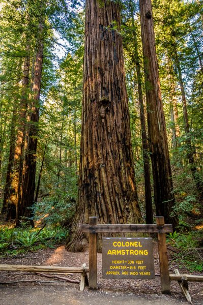 32 Armstrong Redwoods State Natural Reserve 2014_04.jpg