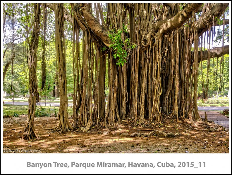 262_Cuba_Halleck_Trip2015_11-Edit.jpg