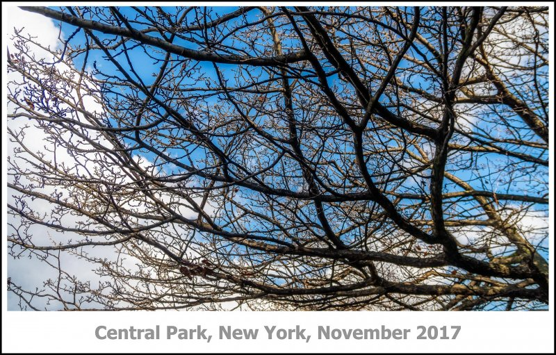 396_New_York2017_11-Edit-Edit.jpg