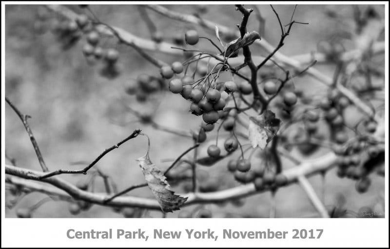 423_New_York2017_11-Edit.jpg