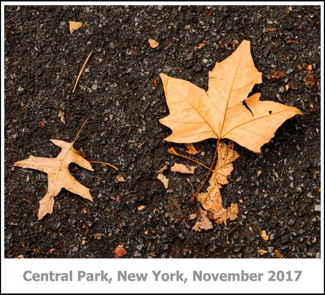 434_New_York2017_11-Edit-Edit.jpg