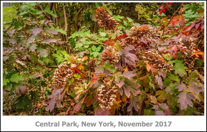 441_New_York2017_11-Edit.jpg