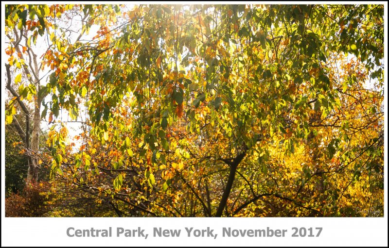 447_New_York2017_11-Edit.jpg