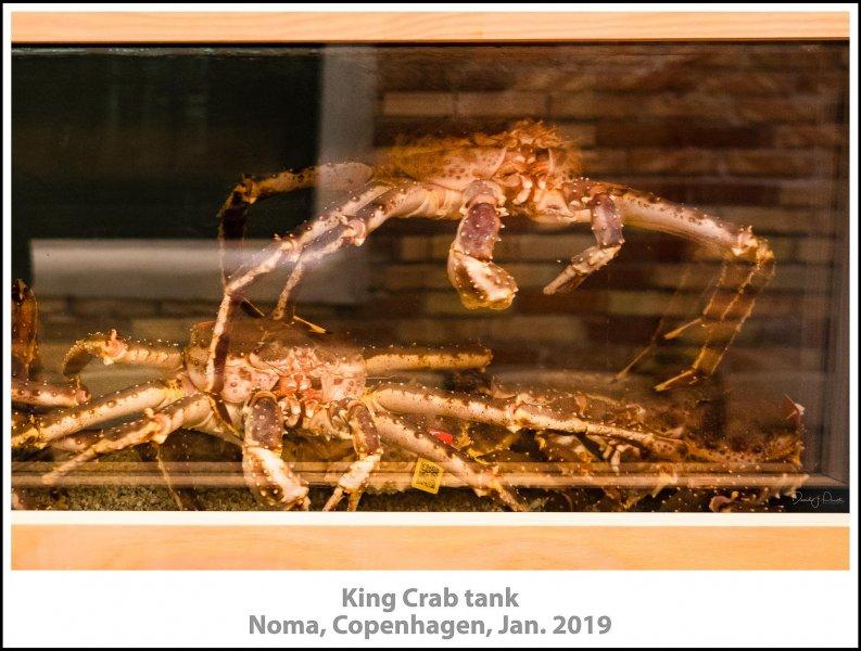 King Crab tank, after dinner tour, Noma, Copenhagen, Jan. 2019